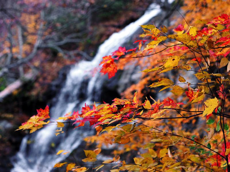 Visit Crabtree Falls in the fall, when Virginia's foliage is in bloom.