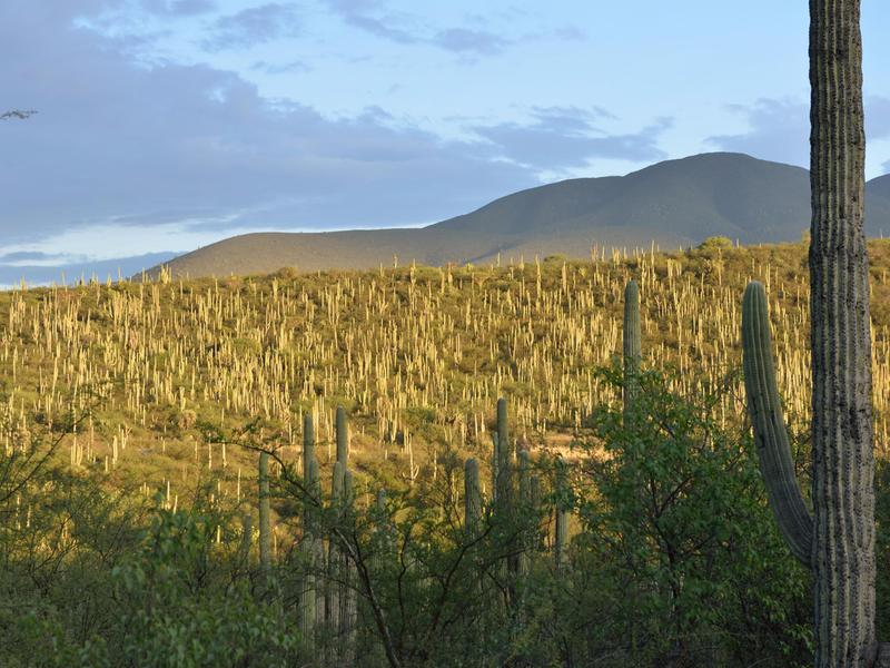 The Tehuacán-Cuicatlán Valley, part of the Mesoamerican region, is an arid or semi-arid zone with the richest biodiversity in all of North America.