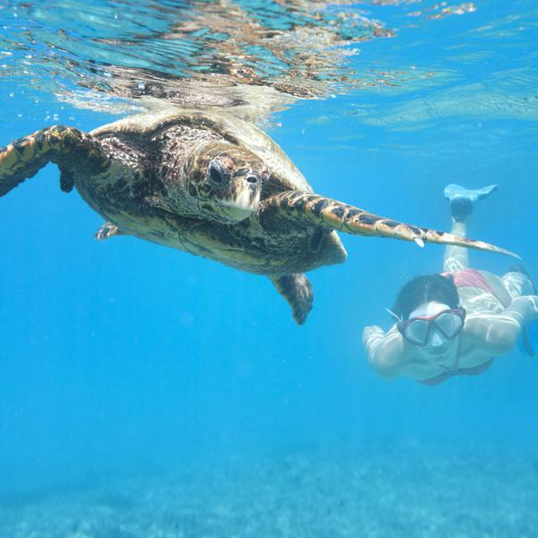 Swimming with a Hawksbill Sea Turtle is one of many activities that lures tourists to the Seychelles.