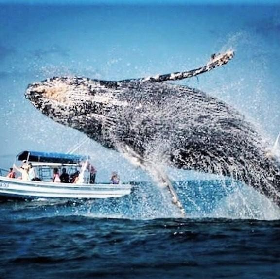 Top Whale Watching Spots to Visit in North America