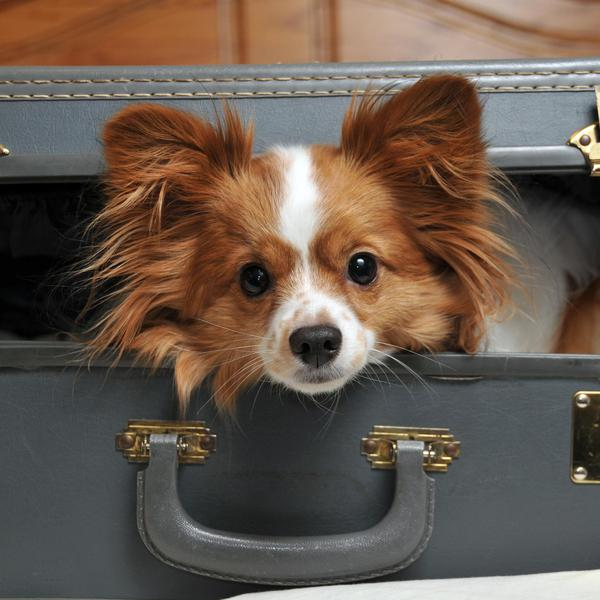 The Ultimate Pet Packing Guide