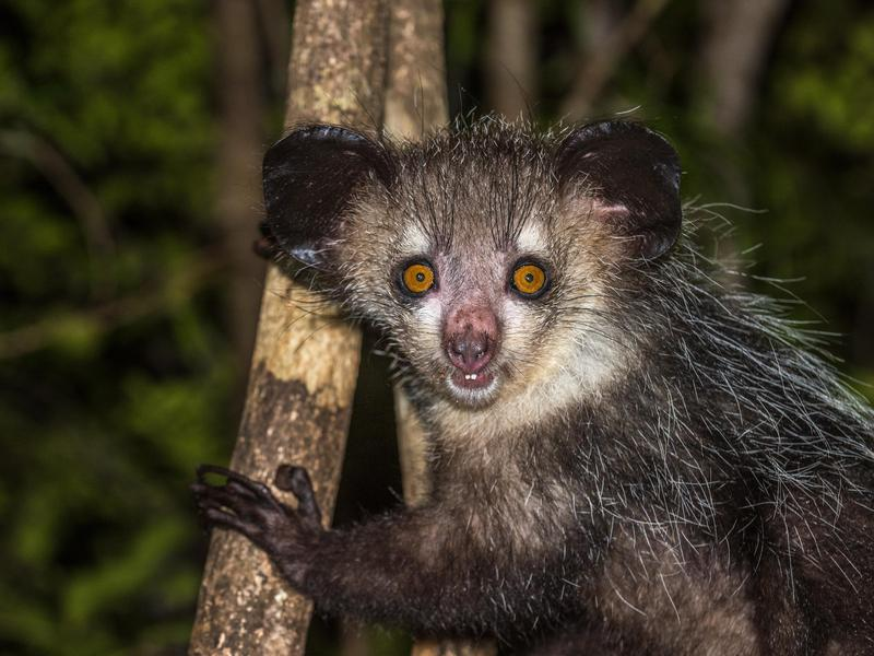 50 Unusual Animals To See Before You Die Far Wide