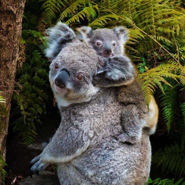Where to Find Australia's Best Wildlife