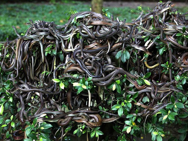 Poisonous snakes keep this aptly named island forbidden. Not that anyone is complaining.