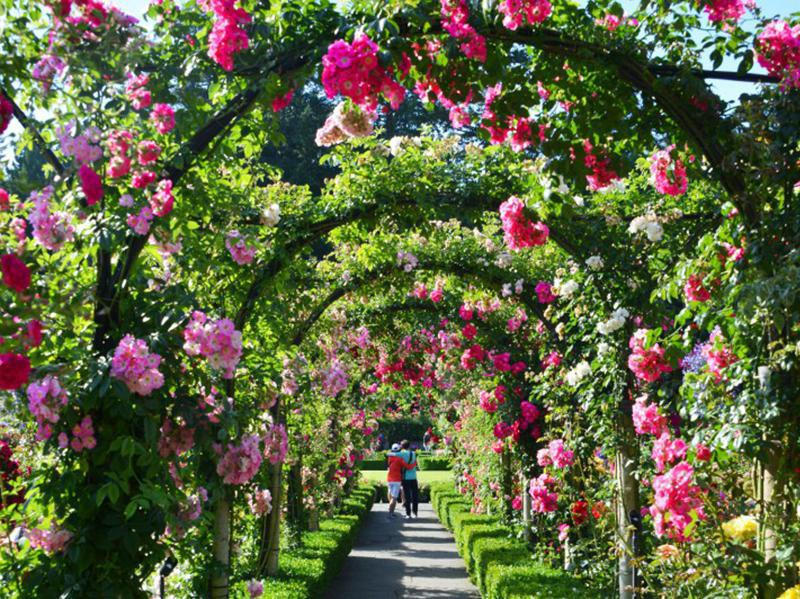 The Butchart Gardens contain 900 varieties of plants over an area of 55 acres.