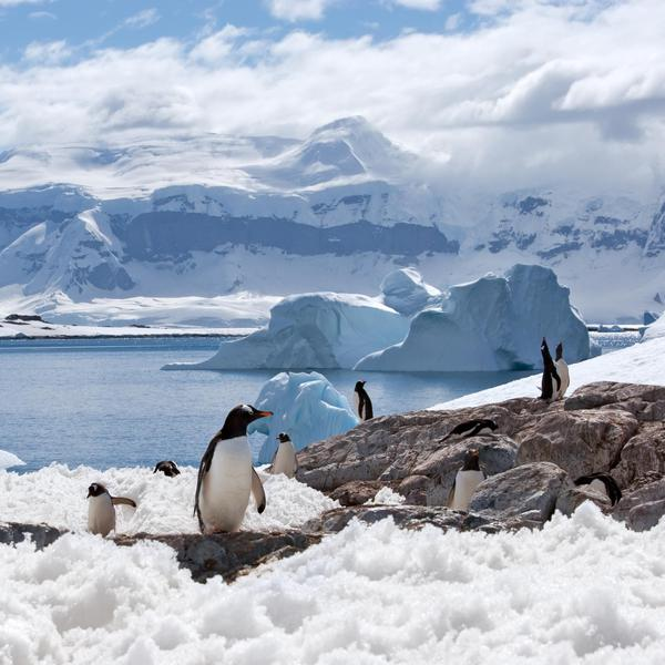 The Extraordinary Experience of Traveling to Antarctica