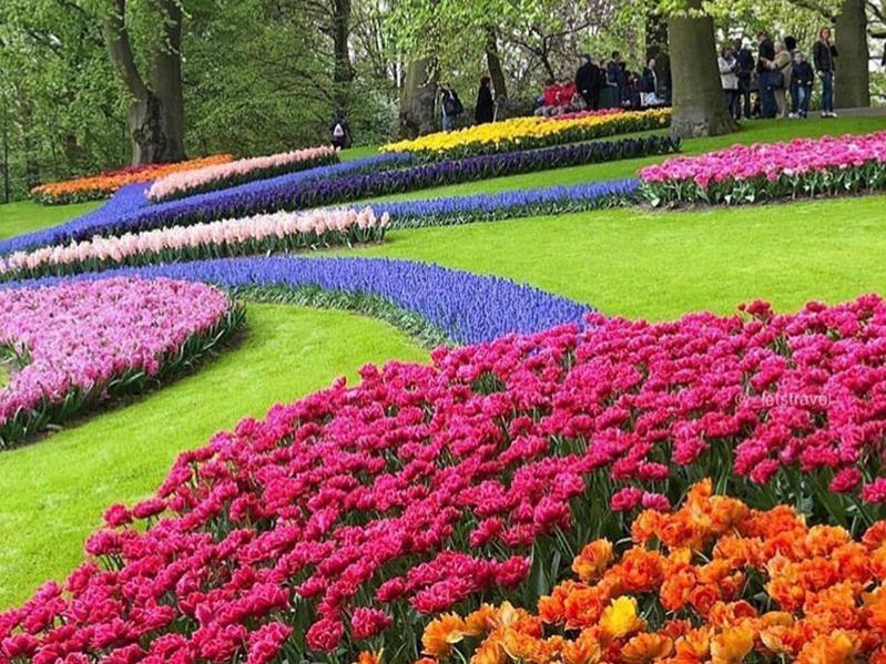 Emirgan Park is world famous for its stunning tulip displays.