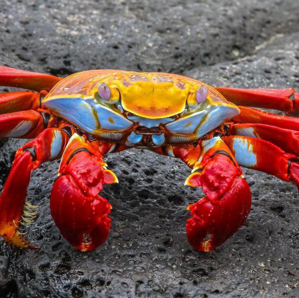 Extraordinary Photos of the Galapagos Islands