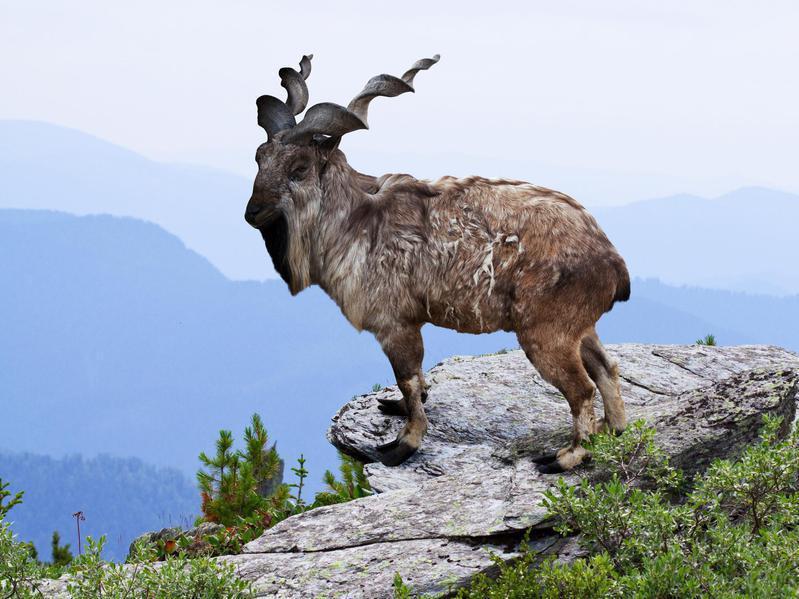 Weird Animals With Horns 2
