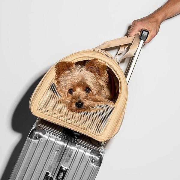 These Dog Travel Crates Are Sturdy and Comfortable