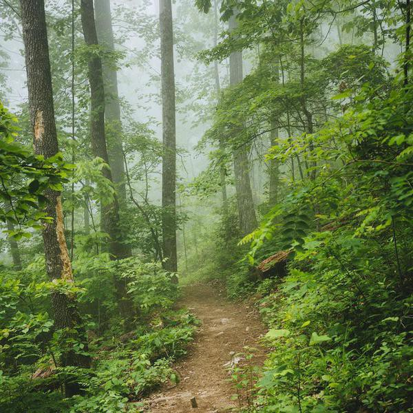 These Are the Best Hiking Trails by State