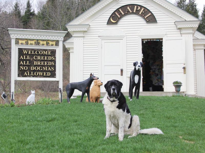 Best Dog Friendly-Vacation Spots From Coast To Coast   Far