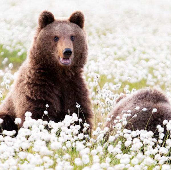 Europe's Amazing National Animals