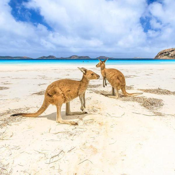 Beautiful Beaches with Amazing Wildlife