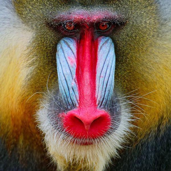 Amazing Photos of African Wildlife