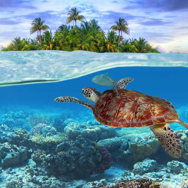 Where in the World to Swim with Wild Sea Turtles