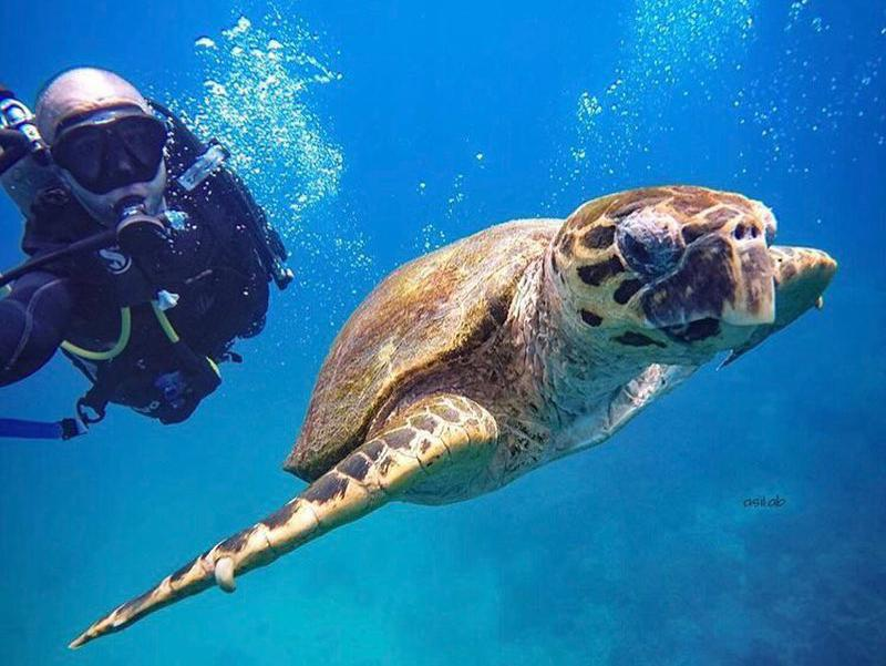 The Ad Daymaniyat islands are the best place to swim with wild sea turtles in the Middle East.